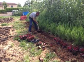 plantant les bogònies